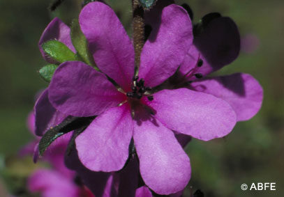 Photo of Dog Rose of the Wild Forces
