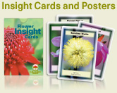 Insight-Cards